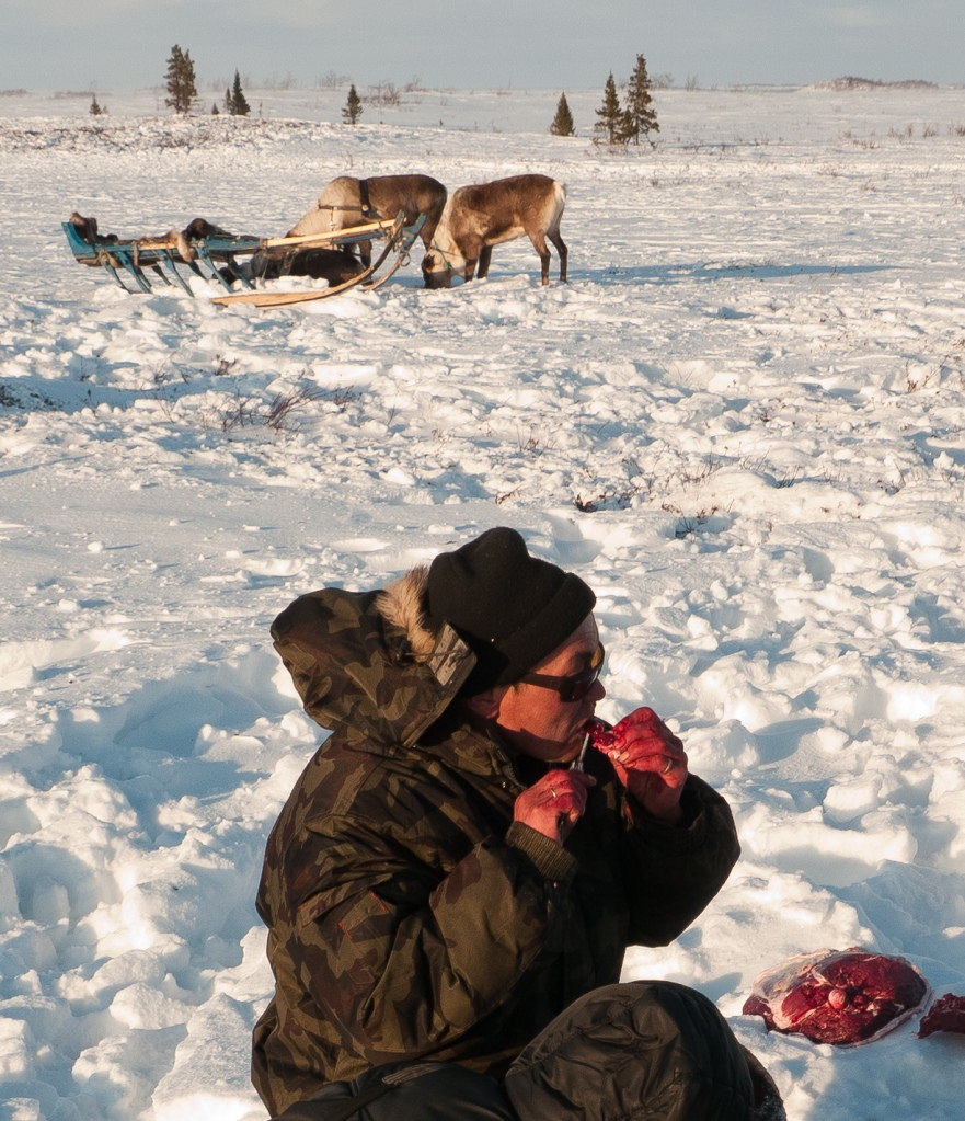 Nenet diet has lot of raw reindeer flesh and blood