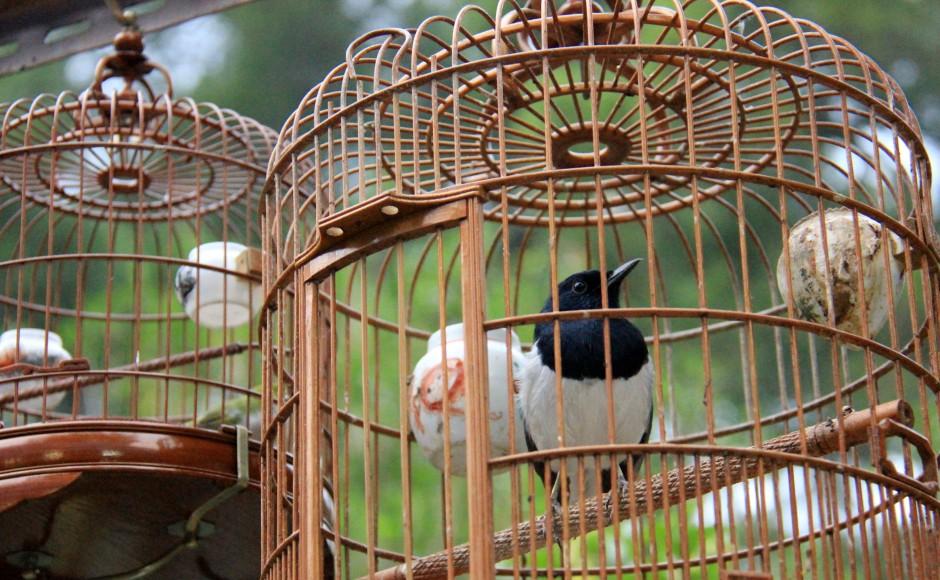 The Birdsong Park