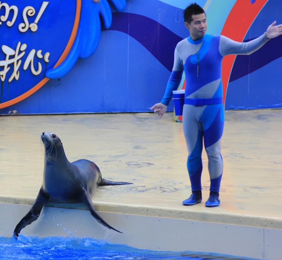 The aquatic show