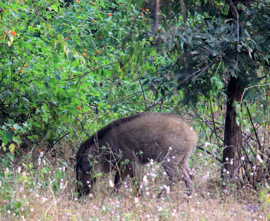 And wild boars