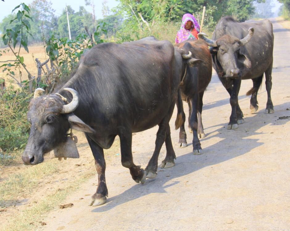Rural BundelKhand