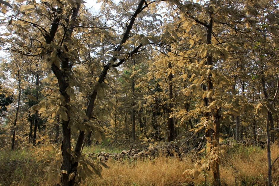 Enchanted Golden Forests