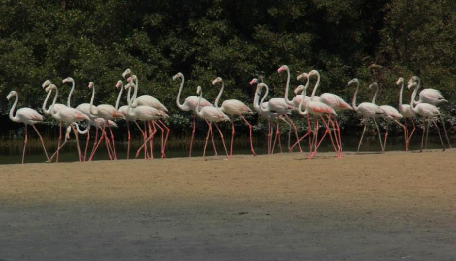 Magical Ras Al Khor Wildlife Sanctuary