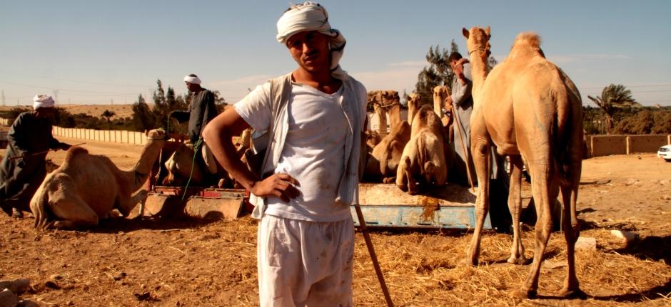 Camel fairs