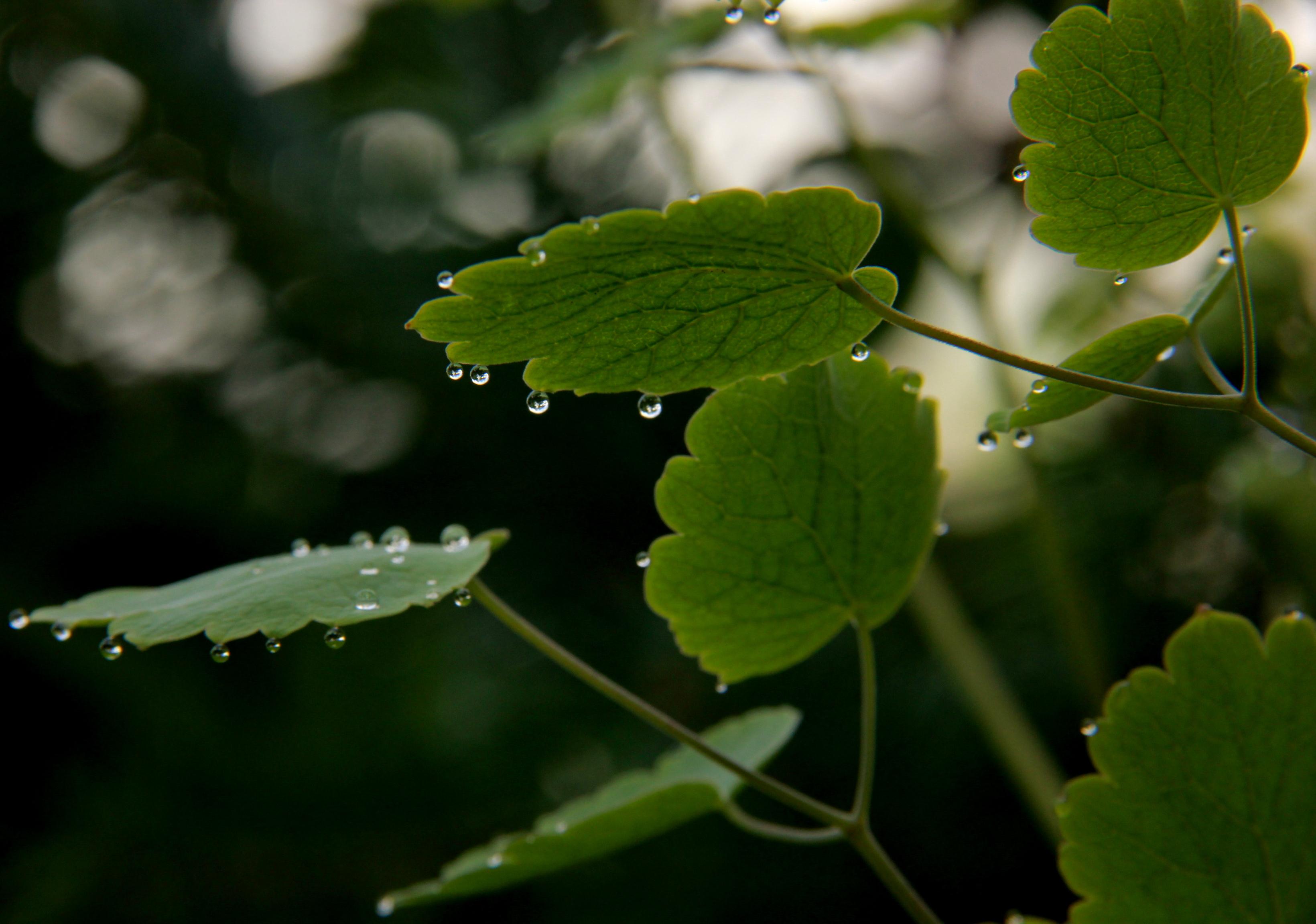 In spite of the rain