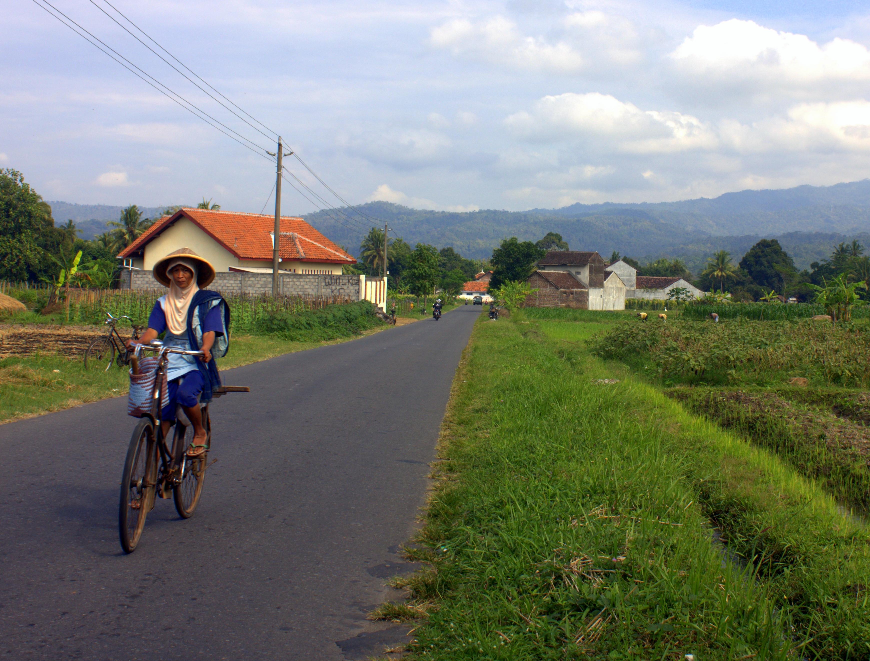 Lovely Javanese countryside