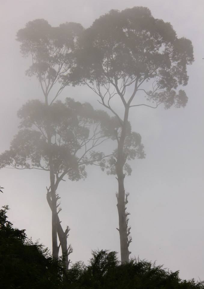 Mists and