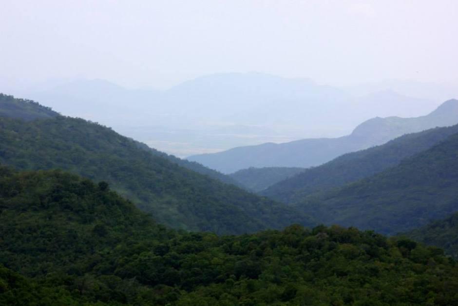Of Palani Hills