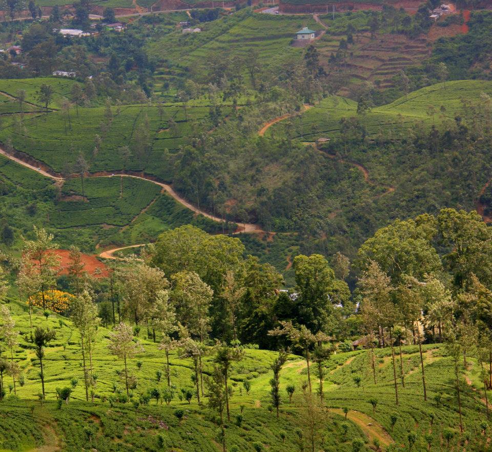 Misty tea estates of Darjeeling