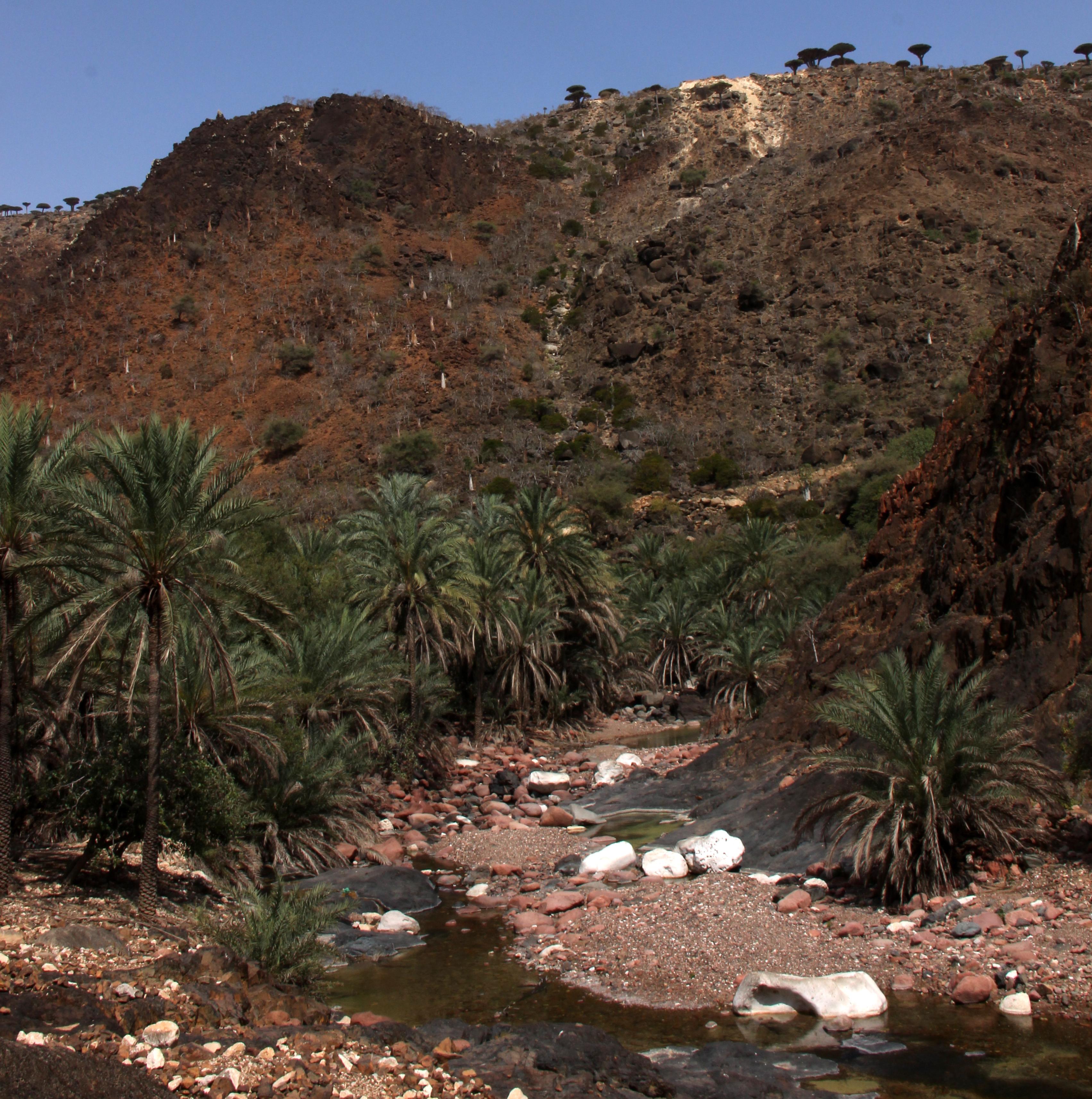 Wadi Dirhur had