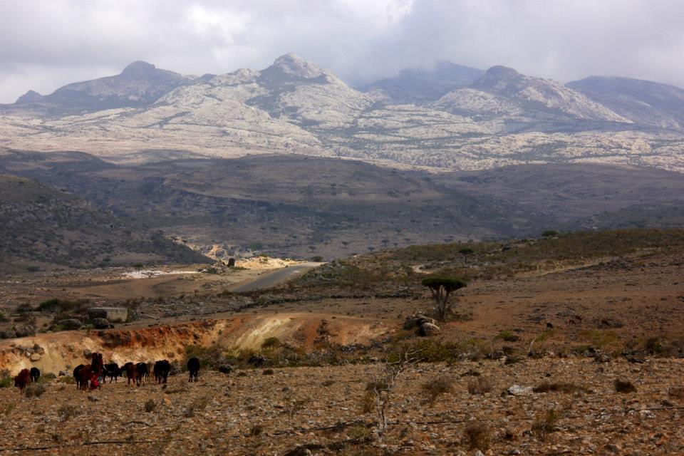 Of Socotran highlands