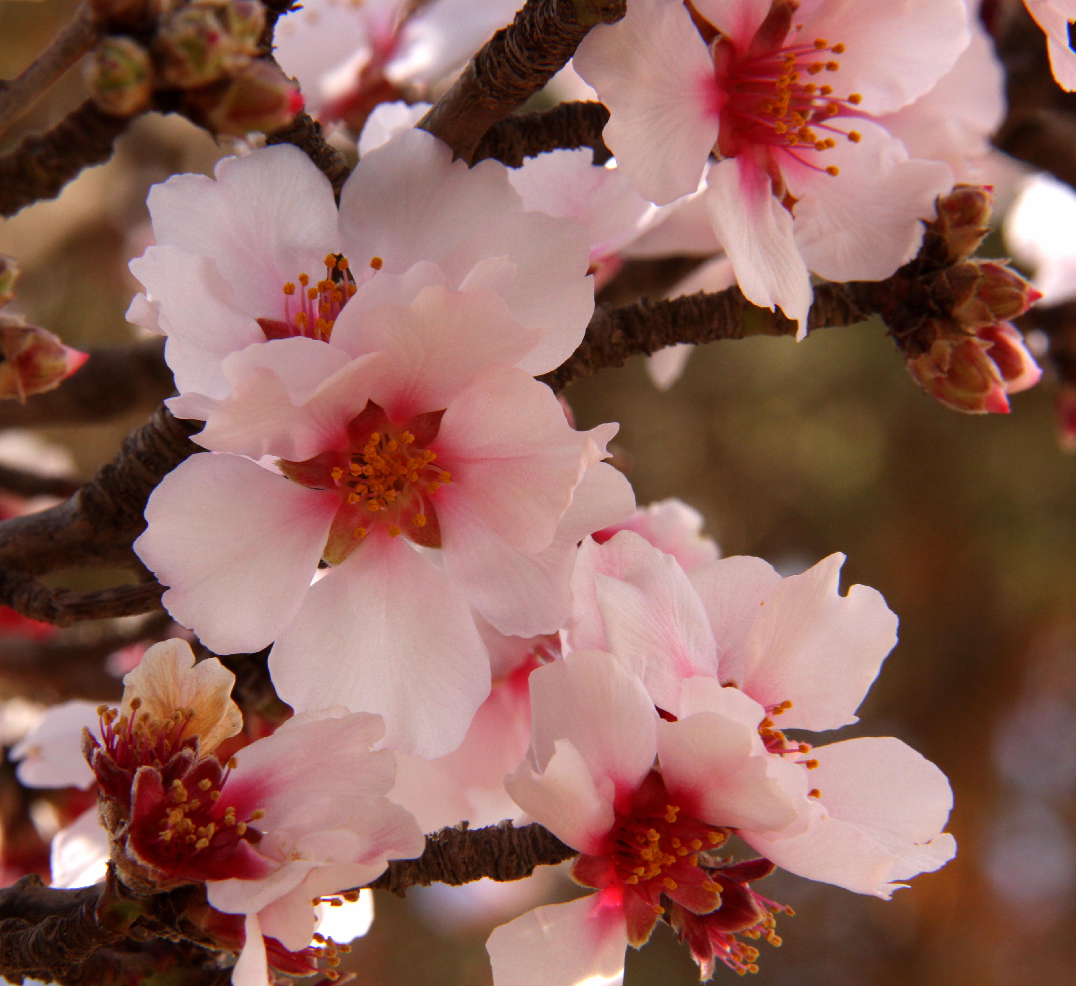 Masses of flowering